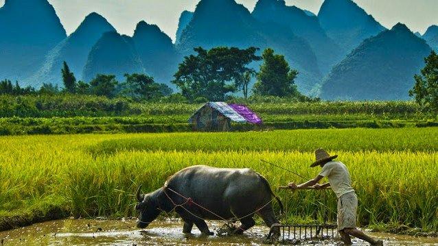 petani beras bulog