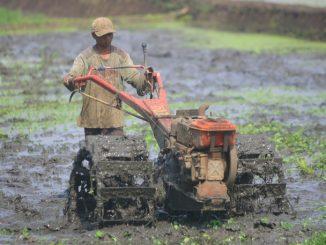 petani traktor